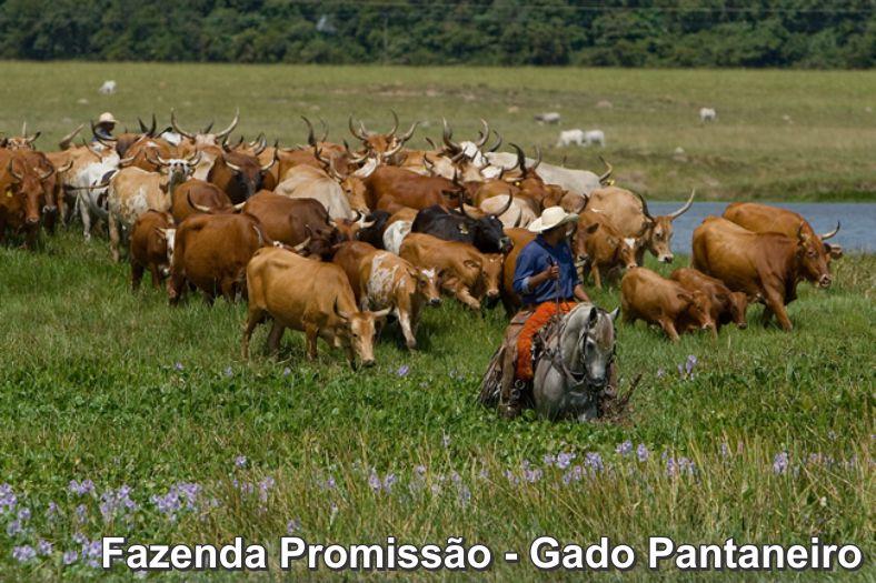 fazenda-promissao